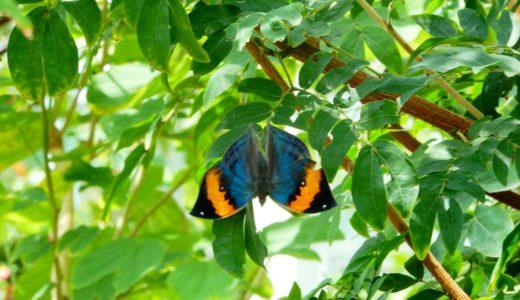 伊丹市昆虫館を徹底レポート!チョウ温室は1000羽の蝶が四方八方を囲む『異空間』
