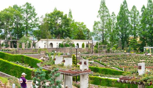 伊丹|荒牧バラ公園の見どころを現地レポ!開花状況やアクセスなどのお出かけ情報もご紹介
