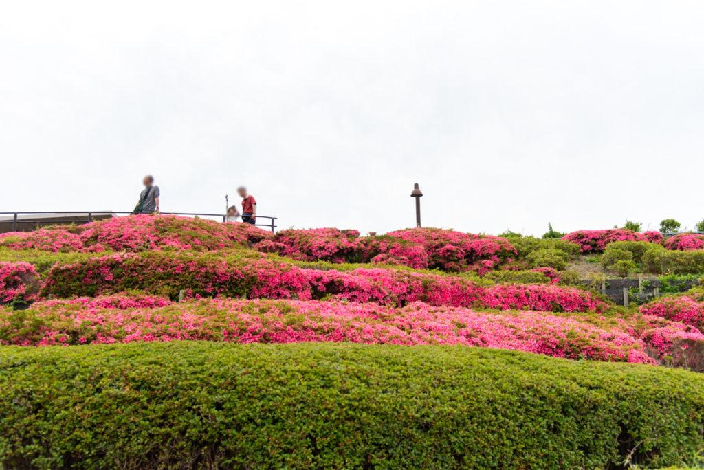 伊丹市にある伊丹スカイパークのつつじの丘の全景